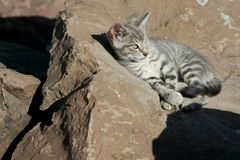 Wild kitten sunning on the rocks Stock Photography