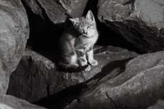 Wild kitten sunning on the rocks Royalty Free Stock Photography