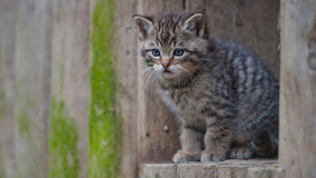Wild kitty Stock Images