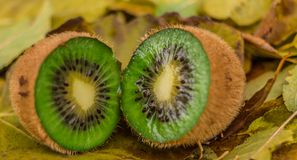 Wild kiwi in the forest... I found some wild kiwi in the forest Stock Photography