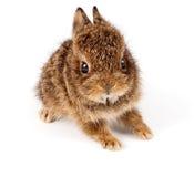 Wild konijn Royalty-vrije Stock Afbeelding