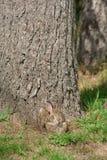 Wild Konijn met een Grijns stock fotografie