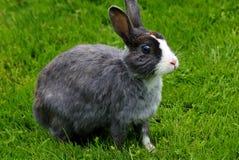 Wild konijn op het gazon Royalty-vrije Stock Foto