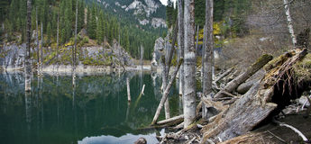 Wild lake Stock Photography