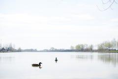 wild lake Arkivfoto