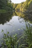 Wild lake in evening forest Stock Photography