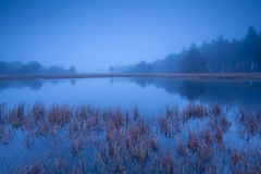 Wild lake in misty dusk Royalty Free Stock Photography