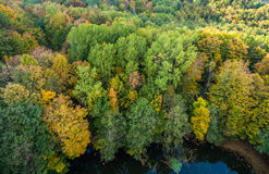 Wild lake in the shadow of hornbeam trees. Stock Photography