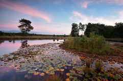 Wild lake with water lily leaves at sunset Royalty Free Stock Image