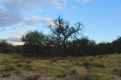 wild land Stock Foto's