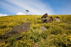Wild Landscape Royalty Free Stock Photography