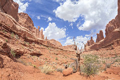 Wild landscape in Arches National Park, Utah, USA.  Royalty Free Stock Photo