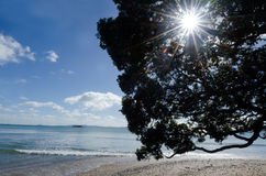 Wild landscape of Coopers Beach NZL Royalty Free Stock Photo