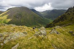 Wild Landscape at Dore Head on Yewbarrow in the Lake District of Cumbria, England stock images