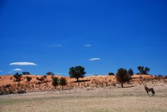 Wild landscape. Kgalagadi Transfrontier Park. Northern Cape, South Africa Royalty Free Stock Image