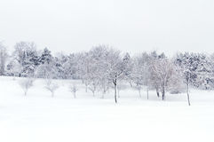 Wild landscape after a snowstorm Royalty Free Stock Photo