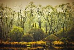 Wild landscape Royalty Free Stock Image
