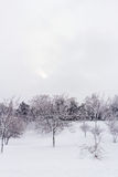 Wild landscape in winter Royalty Free Stock Photography