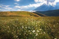 Wild landschap Stock Fotografie