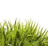 Wild Lang Gras stock foto's