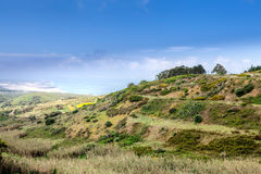 A wild lanscape of green grass Royalty Free Stock Images