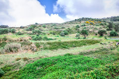 A wild lanscape of green grass Royalty Free Stock Photography