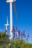 Wild lavanda  against  blue sky Royalty Free Stock Photography