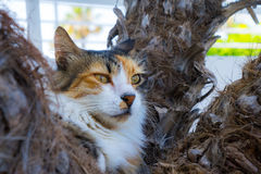 Wild lazy cat royalty free stock images