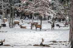 Wild lebende Tiere Stockfotografie