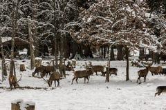 Wild lebende Tiere Lizenzfreies Stockfoto