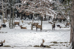 Wild lebende Tiere Stockbild