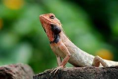 Wild lebende Tiere Lizenzfreie Stockfotos