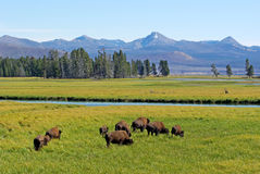 Wild lebende Tiere Lizenzfreies Stockbild