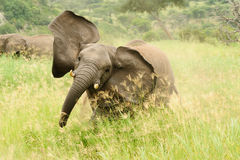 Wild lebende Tiere in Afrika Stockfotografie