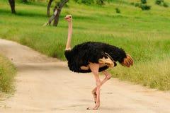 Wild lebende Tiere in Afrika Stockbild
