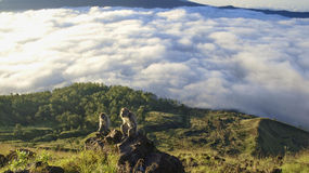 Wild lebende Tiere auf Berg batur Bali Stockbild