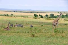 Wild lebende Tiere auf Masai Mara Lizenzfreies Stockbild