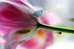 Wild lebende Tiere der Insekte stockbilder