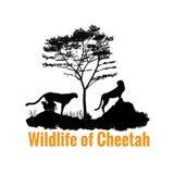 Wild lebende Tiere des Gepardschwarzschatten-Vektordesigns Lizenzfreie Stockbilder