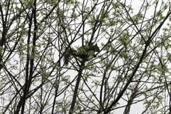 Wild lebende Tiere in einem Baum Lizenzfreie Stockbilder