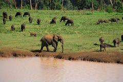 Wild lebende Tiere an einem waterhole stockfoto
