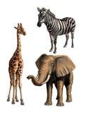 Wild lebende Tiere I Lizenzfreies Stockfoto