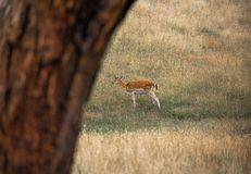 Wild lebende Tiere im australischen Hinterland stockbild