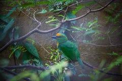 wild lebende Tiere im Bali-Vogel- und -reptilpark Lizenzfreie Stockbilder