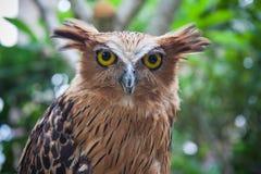 wild lebende Tiere im Bali-Vogel- und -reptilpark Stockbilder