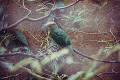 wild lebende Tiere im Bali-Vogel- und -reptilpark Stockfotos