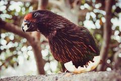 wild lebende Tiere im Bali-Vogel- und -reptilpark Lizenzfreies Stockfoto