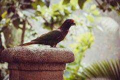 wild lebende Tiere im Bali-Vogel- und -reptilpark Lizenzfreies Stockbild