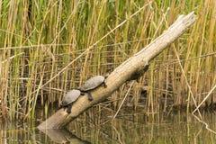 Wild lebende Tiere im Fluss Stockbilder