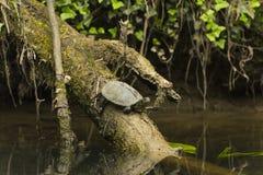 Wild lebende Tiere im Fluss Stockfoto